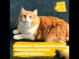 Кошка с ошпаренными лапками обрела дом и семью
