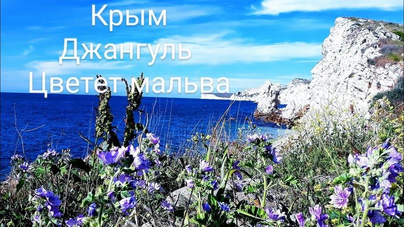 Май 2020 Крым Тарханкут Джангуль Куда поехать отдыхать летом Оленевка Черноморское Дорога