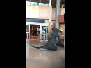 Он вернулся или трогательная встреча динозавра в аэропорту