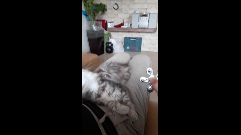 Фрося, котенька