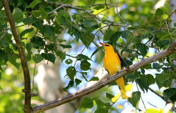 Народные приметы о птицах, связанные с несколькими видами птиц.