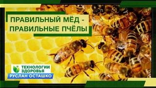 Правильный Мёд - правильные пчёлы (Руслан Осташко)
