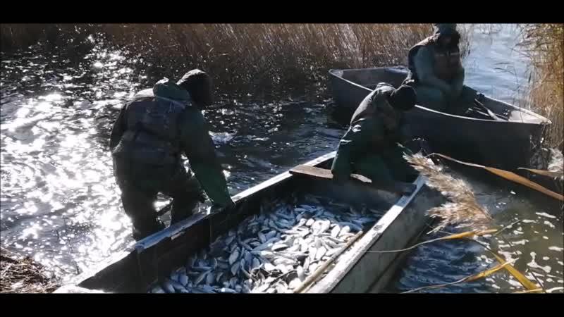 Рыбный промысел в Исилькульском районе