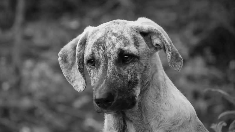 Галина Банько - Бестолковая собака