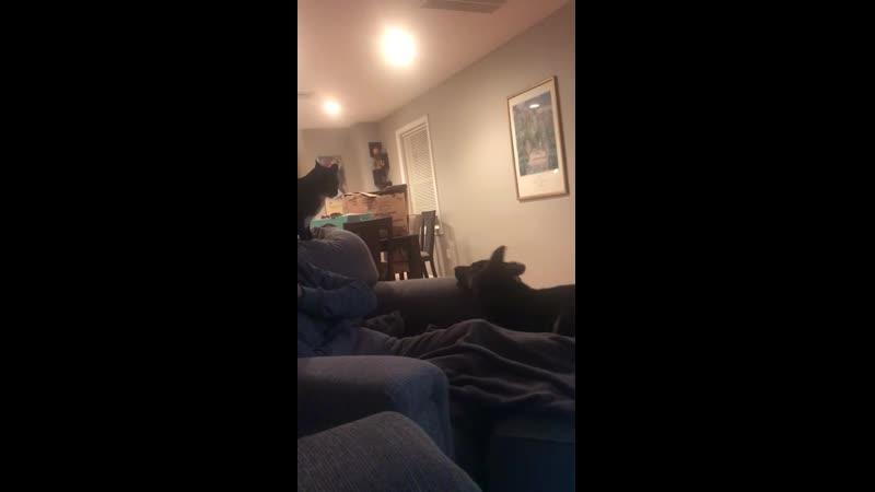 Puppy vs. cat