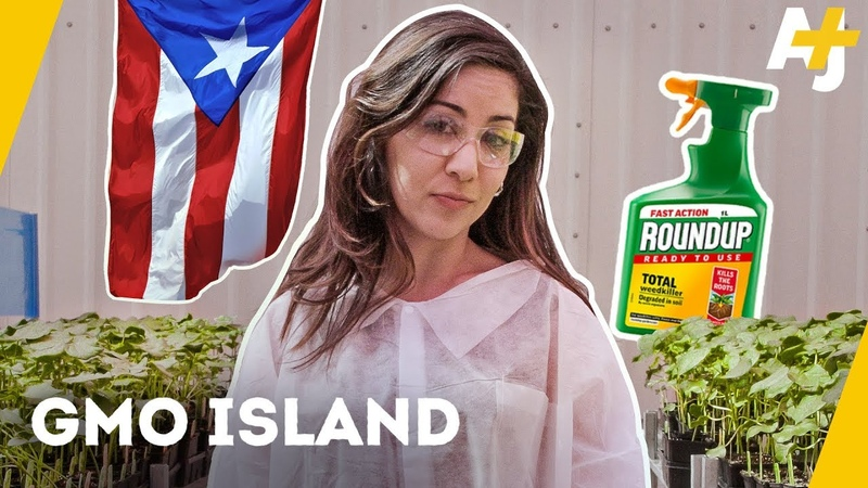What is Monsanto doing in Puerto Rico | AJ