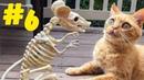 6 Смешные коты 😹 Приколы с кошками 2021 🤣 Смейся до слез 😂 Смешные котики