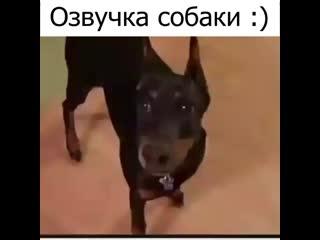 Элитный юмор (720p).mp4