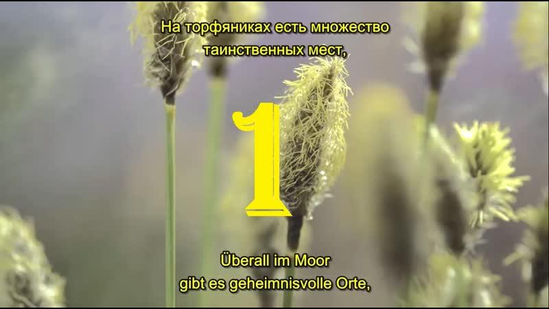 1 2 Magie der Moore Магия болот