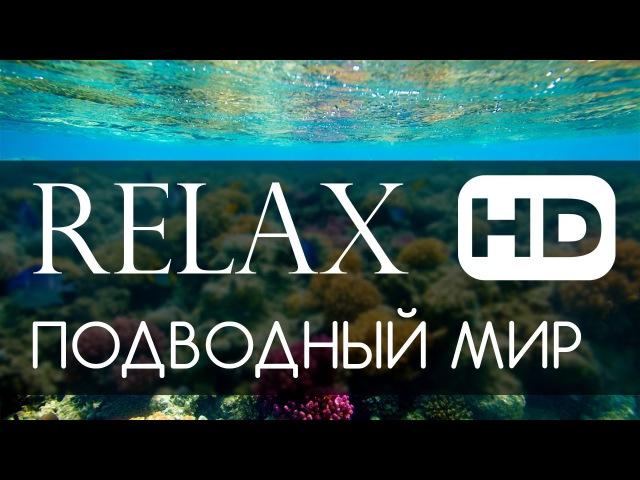 Релакс подводный мир океана HD 1080p (спокойная живая музыка)