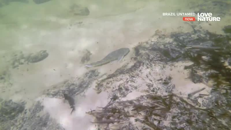 Дикая Бразилия Пантанал