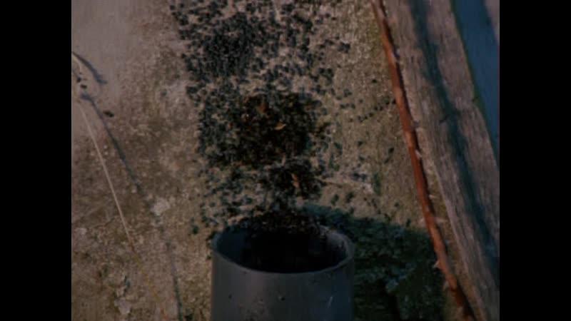 1977 - Муравьи (Муравьи-убийцы) / Ants (It Happened at Lakewood Manor)