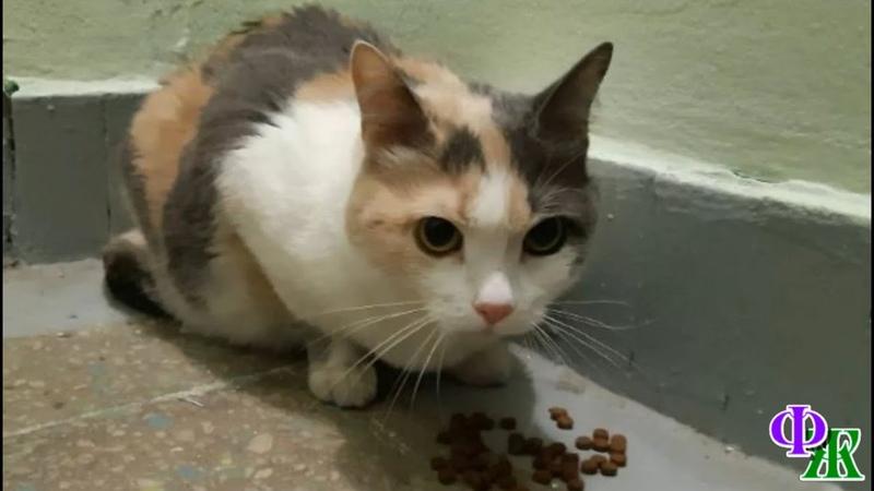 Кошка Юся уже давно жила в подъезде ей было тоскливо и горько Она стала никому не нужна…