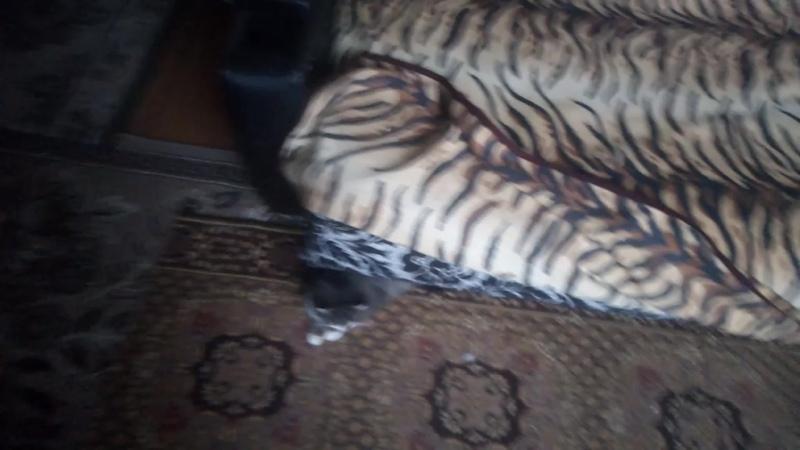 кот мурзик