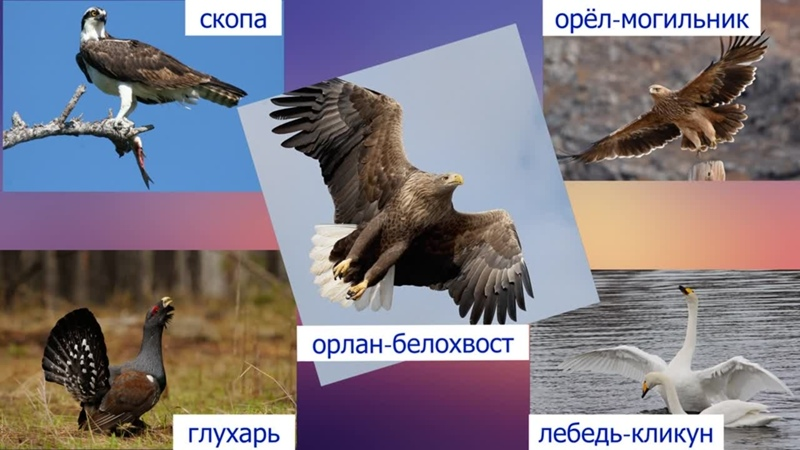 Ильменский заповедник. Видео-презентация.Крутолапова Яна