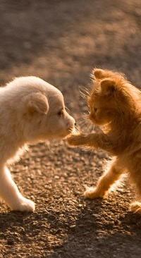 Дом для кошек построили ростовчане на Ларина » Privet-Rostov.ru ... | 366x200