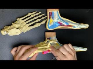 Video by Anna Vladimirova