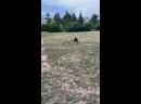 Видео от †★Black DøBêRmÃñ и Ryzhe beloye bestiye PitBul★†