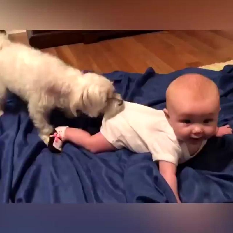 Всем известно, что собака - друг человека.  А маленького - тем более! вот зачем нужны собачки для детей !