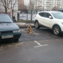 Дмитрий Михайлов фотография #4