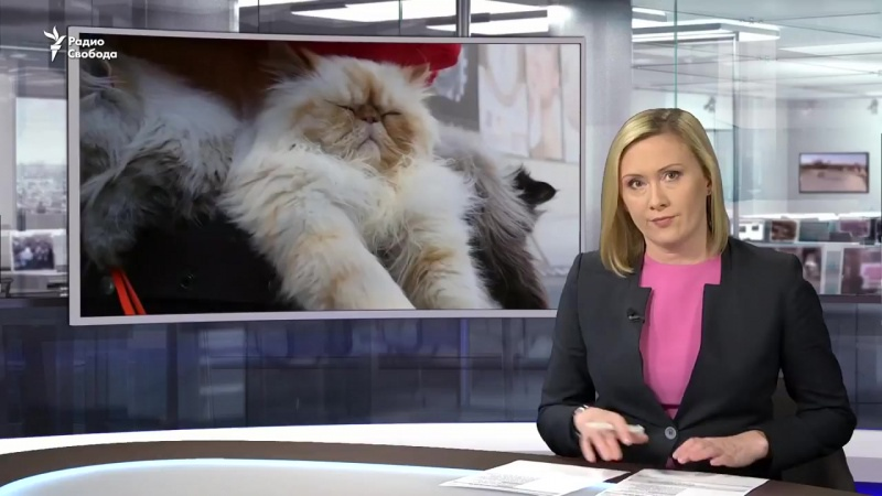 10 кошек выступают в защиту бездомных животных.