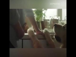 Собака покидает хозяина только один единственный раз (6 sec)