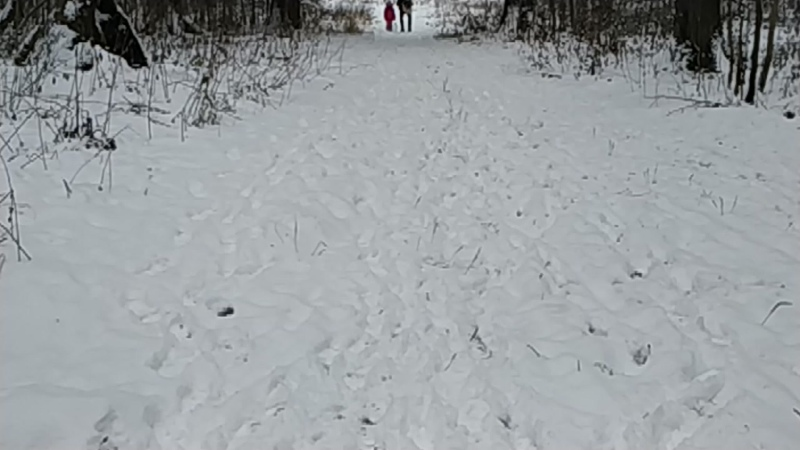 Прогулка с Итой по лесу