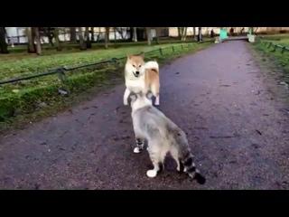 Умный пруд не обходит, умный пруд переходит: пёс Стив & кот Котиша