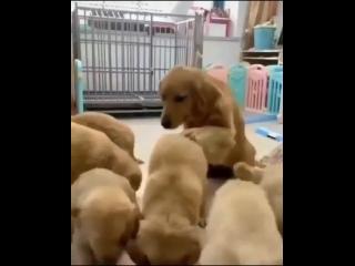 Вот почему мы любим собак.