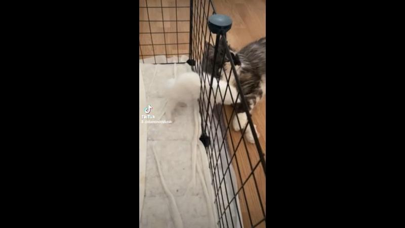 Видео от Евгении Мольнер