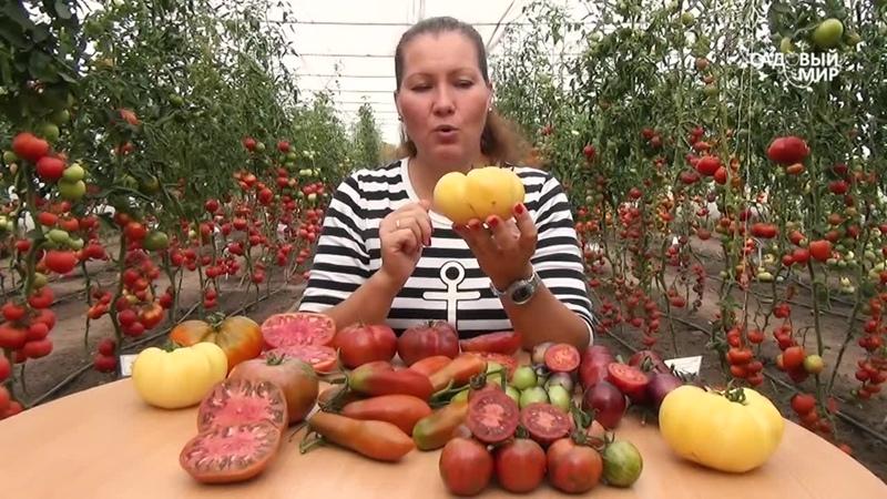 СЕМЕНА КУПИТЬ НА 2021 г ЗАПЛАНИРОВАЛИ УЖЕ Томаты новинки самые урожайные вкусные необычные сорта