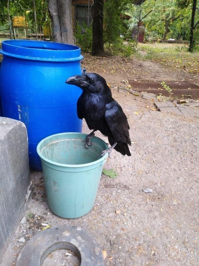 В Азове ищут павлина , домашнего ворона и золотую серёжку .