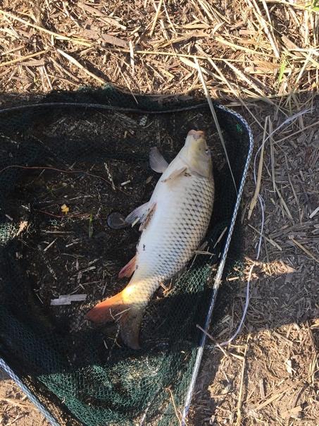 Всем рыбачкам привет. Мои сутки  на воде: 9 подходов пять...