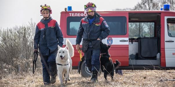 Уши, лапы и нюх: столичные служебные собаки помогл...
