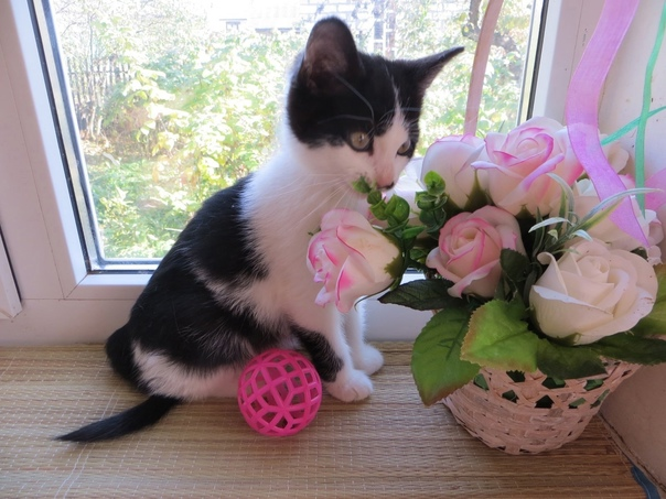 В поисках семьи котята, девочки. Ласковые, игривые...