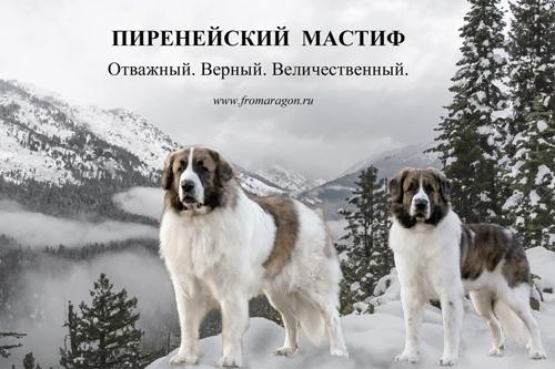 Какую собаку выбрать для охраны дома Самара
