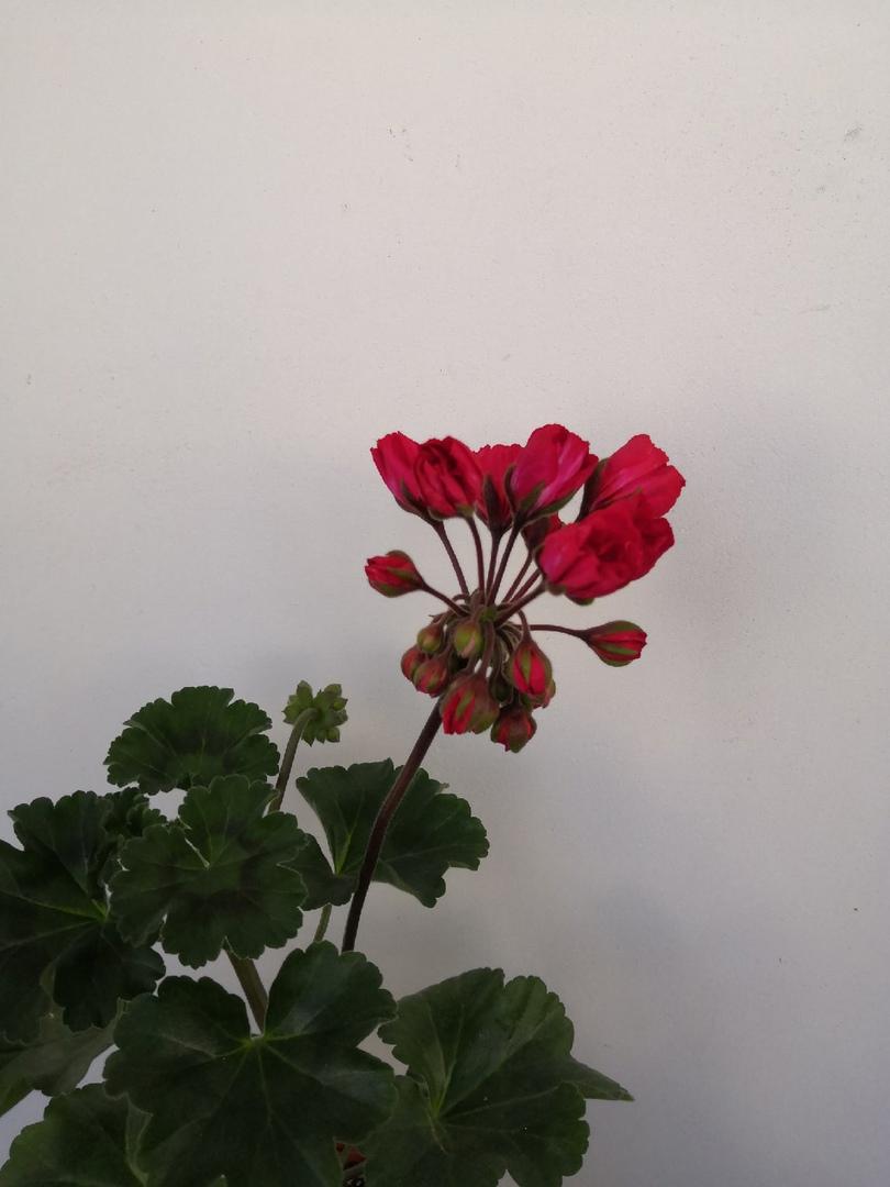 фото из альбома Елены Хамзиной №2