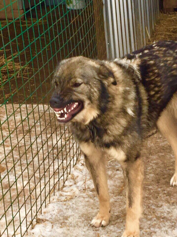 ❤ Собака-улыбака, НЮША, в поисках дома.   Симпатичная
