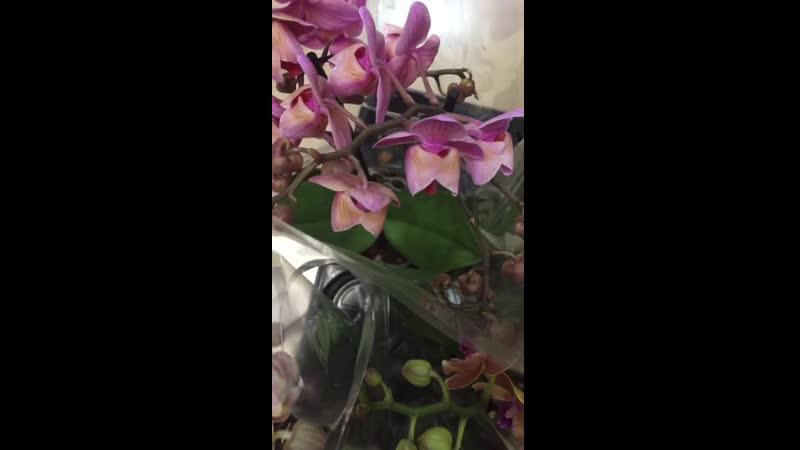 Новая поставка бабочек и пелоров