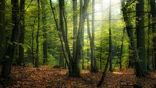 по грибы в осенний лес 8 окт 2016/безумное количество грибов!!!
