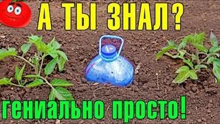 КАПЕЛЬНЫЙ ПОЛИВ БУТЫЛКАМИ!  Бесплатное капельное орошение! Plastic Bottle Drip Irrigation System!