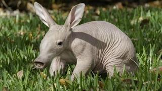 «Удивительные животные мира»: познавательная онлайн-программа в Клубе выходного дня