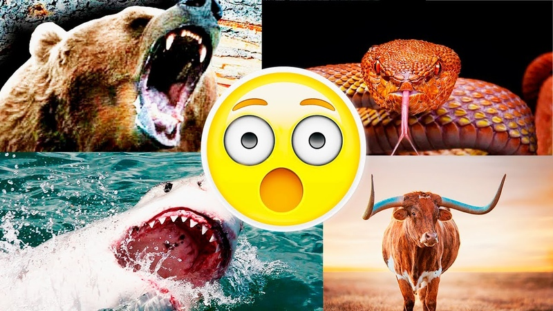 TOP 10 ANIMAL ATTACKS YOU DON´T WANT TO EXPERIENCE