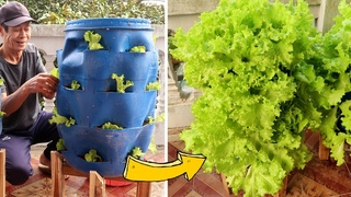Amazing Idea | Recycling Plastic Drums into Vegetable Towers | TEO Garden