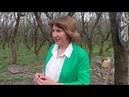 Государственное равнодушие за бетонным забором какие тайны скрывает Коробковский сад