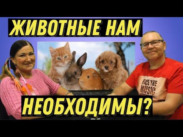 Зачем нужны Домашние животные Идеальная пара 155