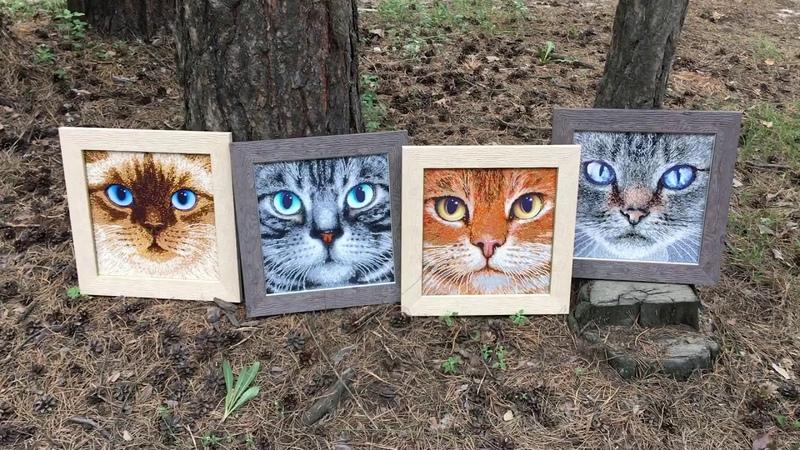 Оформленные работы Тэла Артис Серия коты