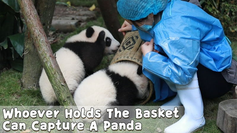 Whoever Holds The Basket Can Capture A Panda iPanda