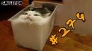 КОШКИ 2019 ПРИКОЛЫ С КОШКАМИ Смешные коты и котики 2019 Funny Cats