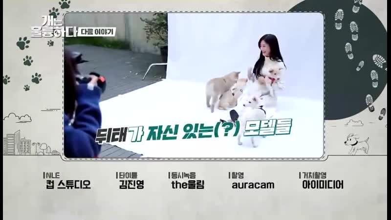 INFO 201019 ↝ Джой появится в следующей серии Dogs Are Incredible 26 октября в 10 40 вечера по KST на KBS2